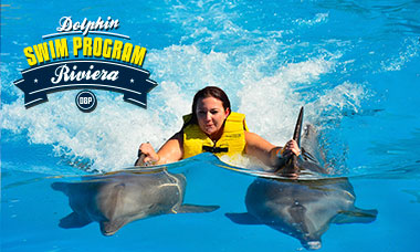 Swim with dolphins in Riviera Maya Spring Break deals - Dolphin Swim Program