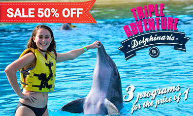 Dolphin swim programs - Triple Adventure Riviera Maya Spring Break deals