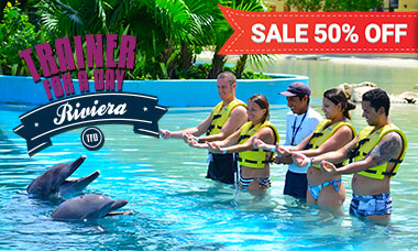 Dolphin swim programs - Trainer For a Day in Riviera Maya Spring Break deals