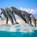 Dolphins jumping, TripAdvisor reviews