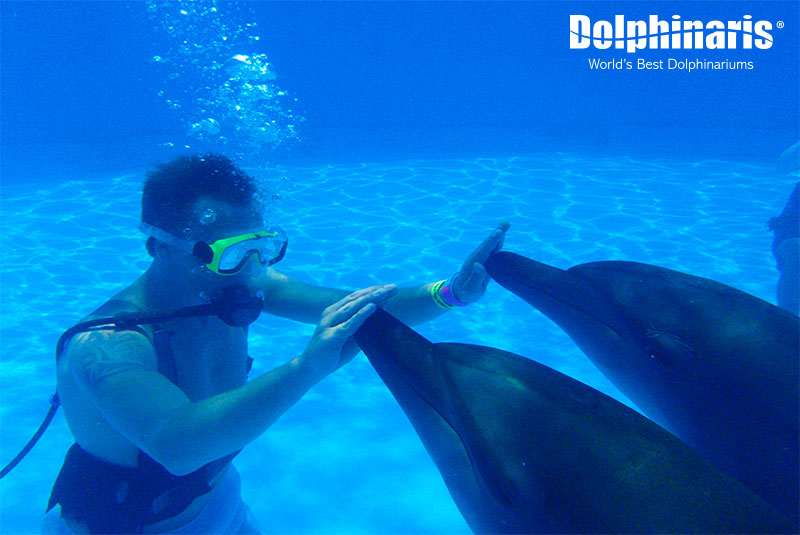 Diving session in the dolphin Trainer for a Day program.