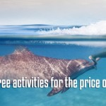 Dolphin Swim Adventure Riviera Maya