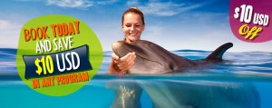 dolphinaris-book-today-save-dolphin-swim-programs