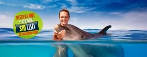 10 USD de descuento reservando online tu nado con delfines.