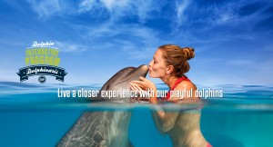 Swim with Dolphins - Dolphin Interactive Program
