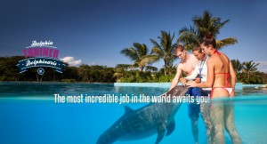 Swim with dolphins - Trainer for a day
