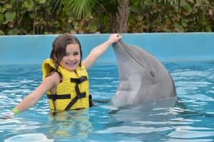 Lugares populares para nadar con delfines