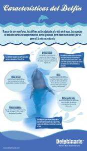 caracteristicas del delfin