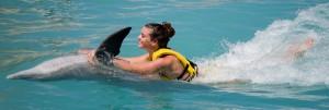 Dolphin Trainer Program-Cozumel Belly Ride