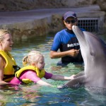 Family quality time with the dolphins