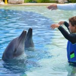 Great dolphin interaction