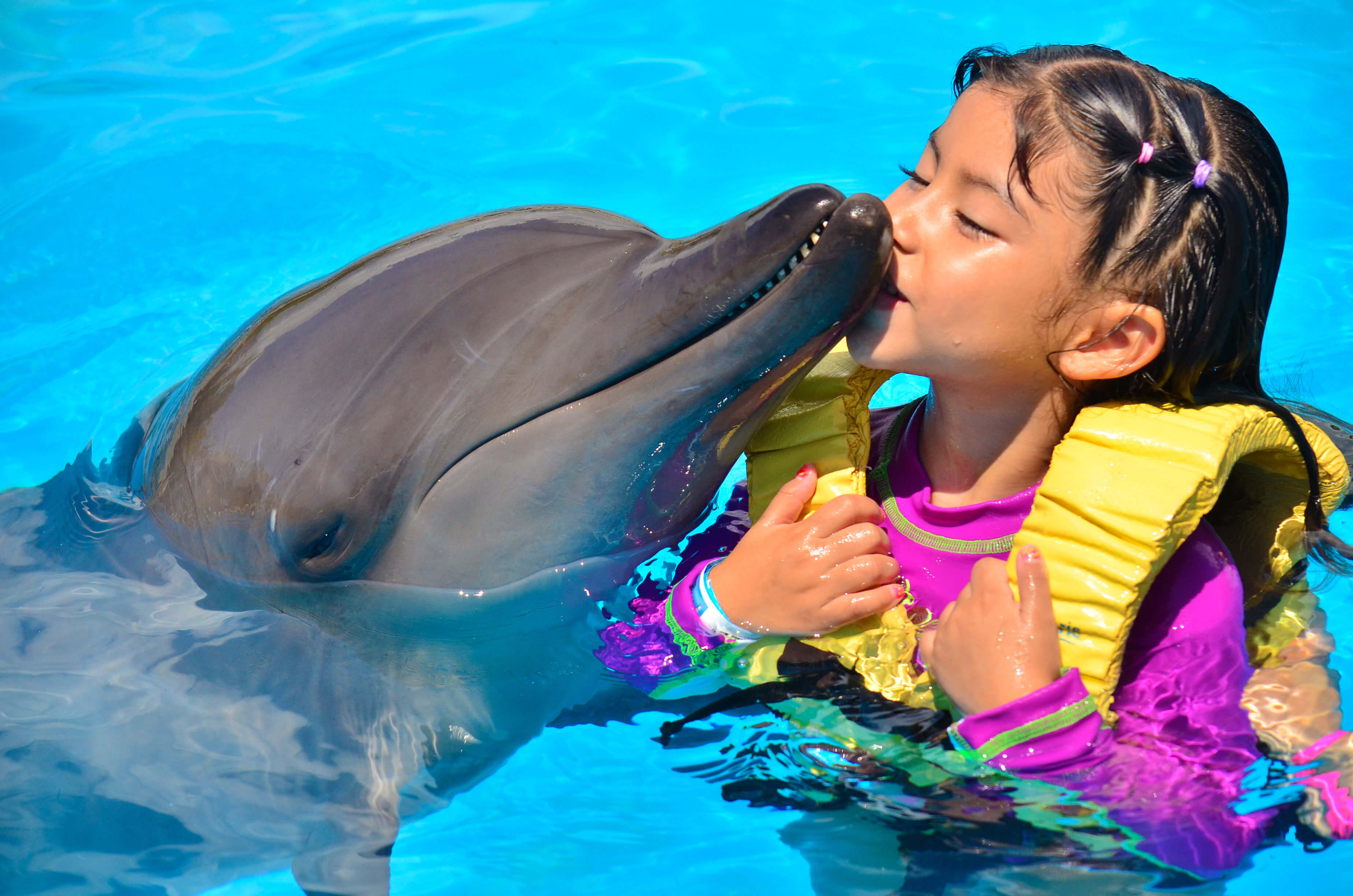 Kids love dolphins dolphinaris kids love dolphins voltagebd Images