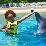 Magical interaction with dolphins