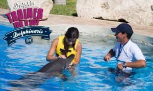 Nadar com golfinhos em Barcelo Riviera Maya - Treinador por um diaNadar com golfinhos em Barcelo Riviera Maya - Treinador por um dia