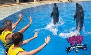 Nadar com golfinhos em Cancun - Treinador por um dia