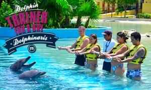 Nadar com golfinhos em Riviera Maya - Treinador por um dia
