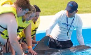 Nadar com golfinhos em Tulum - Treinador por um dia