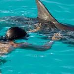 Aprendiendo sobre delfines
