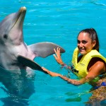 Dolphin interaction at Cozumel