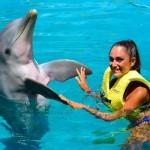 Interação com golfinho em Cozumel