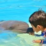 Interação pessoal com um golfinho