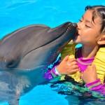 Los niños aman a los delfines