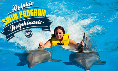 Swim with dolphins in Cancun - Dolphin Swim Program - Dorsal Ride