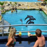 The Sundeck Lounge Dolphinaris Cozumel - Preferential dolphin view.