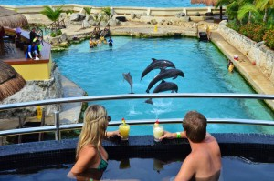 The Sundeck Lounge Dolphinaris Cozumel - Preferential dolphin view