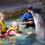 Tiempo familiar de calidad con delfines
