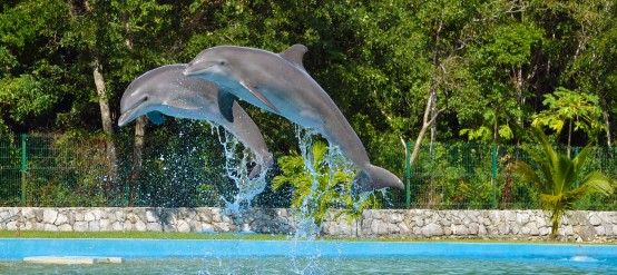 Dolphins offer great shows in the water