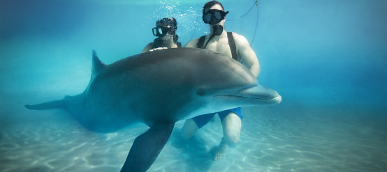 To watch dolphins underwater are a nice activity to enjoy